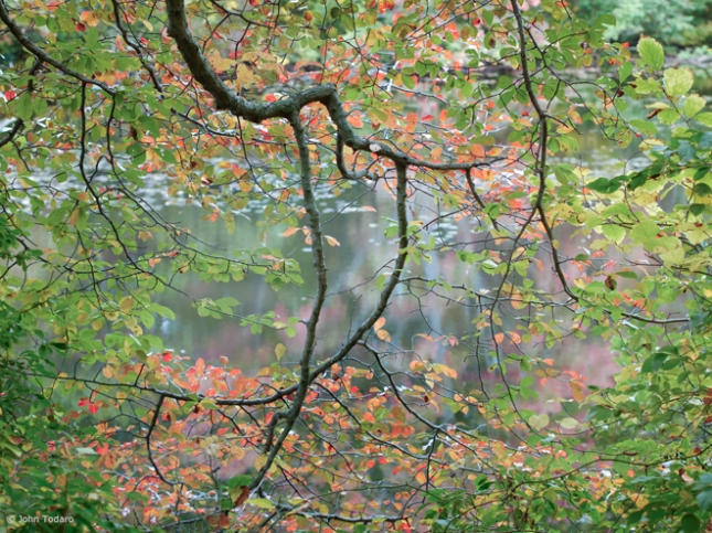pond branches III